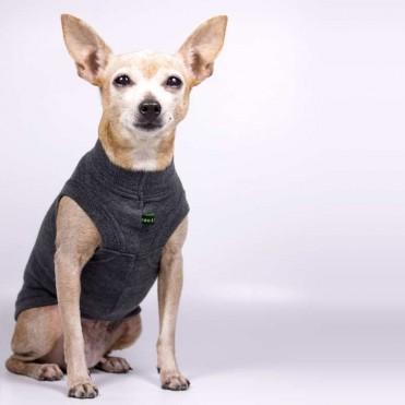 Jersey para perros gris de caninetto