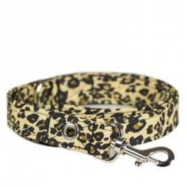 Correa Leopardo