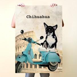 Chihuahua en Roma