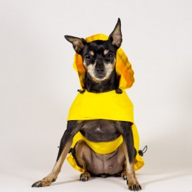 Chubasquero amarillo para perros de caninetto