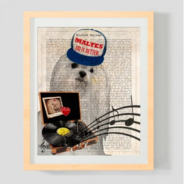 Bichon Maltes con gorra