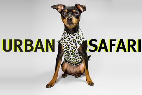 tara con su camiseta para perros de caninetto