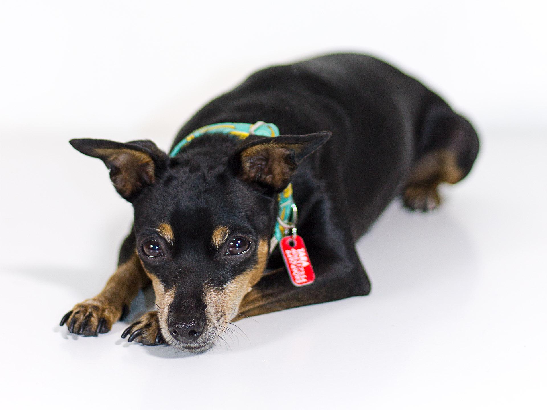 caninetto ropa y accesorios para perros urbanos. Diseño y