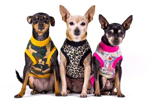 tara, lulu y celia con sus camisetas para perros de caninetto