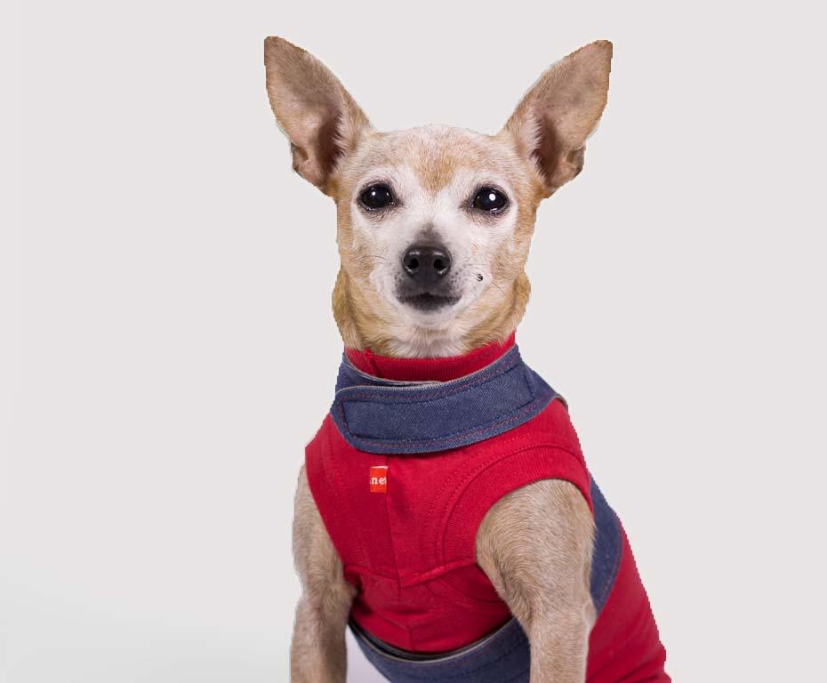 Celia con camiseta y arnes caninetto