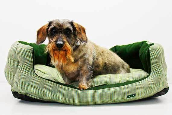 Brigitte, en una de las camas para perro de caninetto
